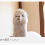 フリー写真素材サービス「ぱくたそ」が使えすぎてヤバイので共有するよ!!