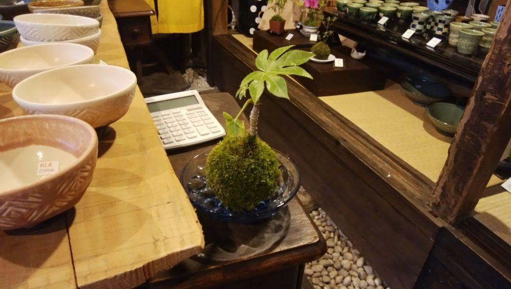 苔玉と植物の画像