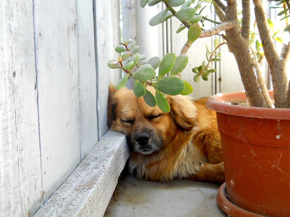 犬 お昼寝