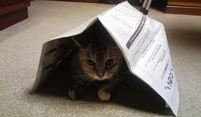 引きこもっている猫