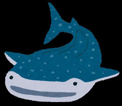 ジンベエザメのイラスト