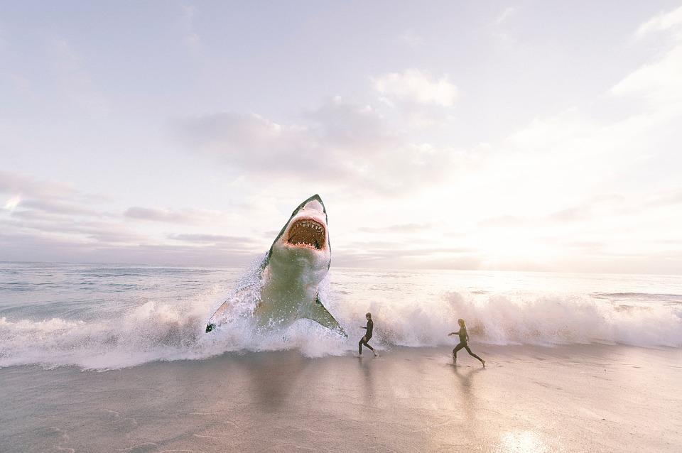 海水浴場に出てきたサメ