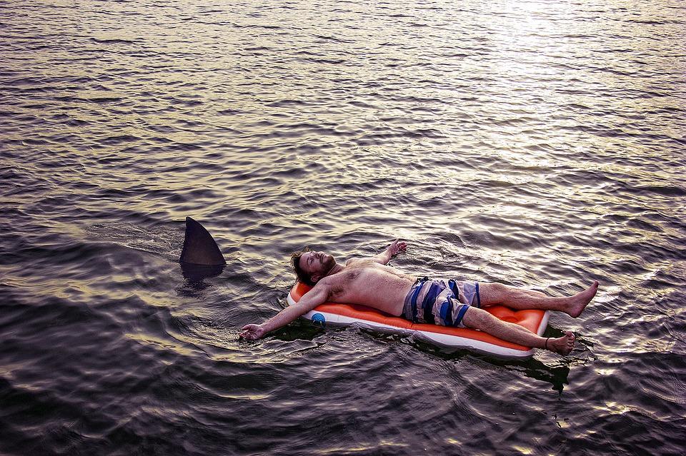 忍び寄るサメ