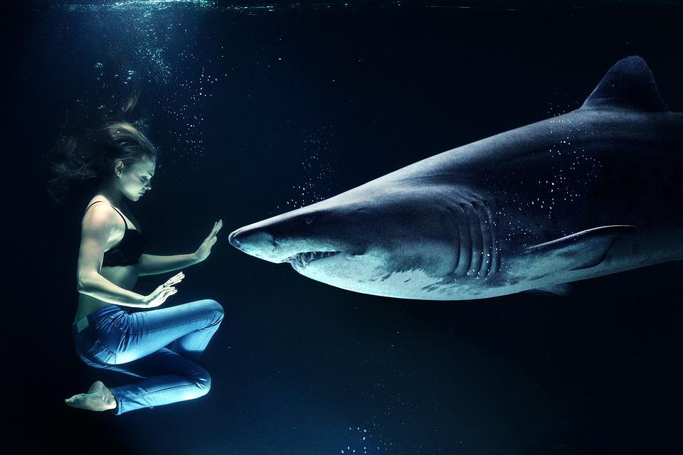 ホオジロザメと女性