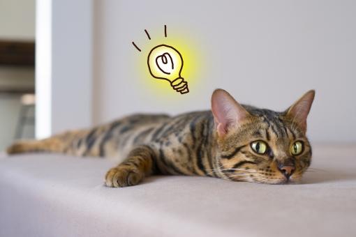 何かを発見した猫