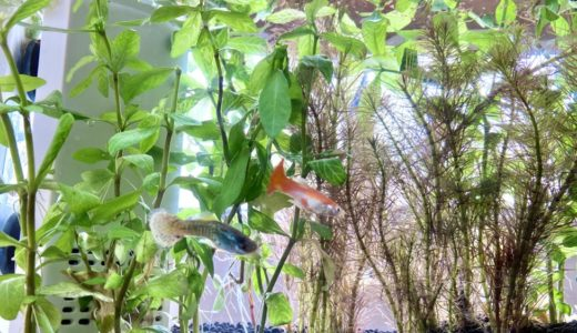 熱帯魚&観葉植物はとてもコスパが良いペットさんである説