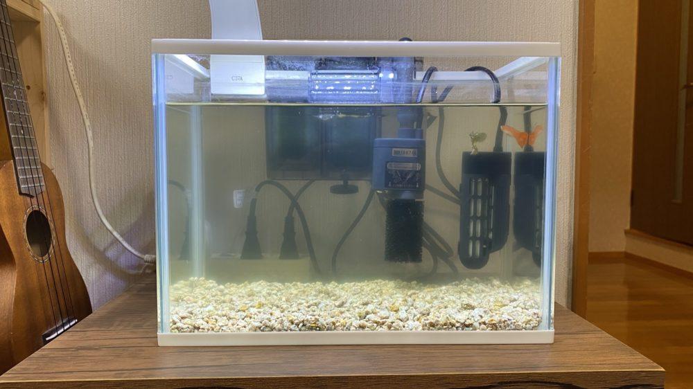 熱帯魚 水槽