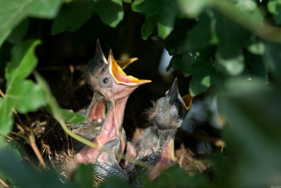鳥 雛 巣