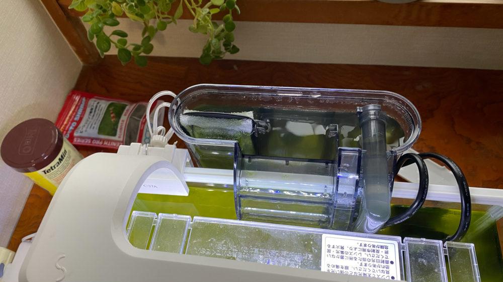 青水対策解消記の水槽の様子 (8)