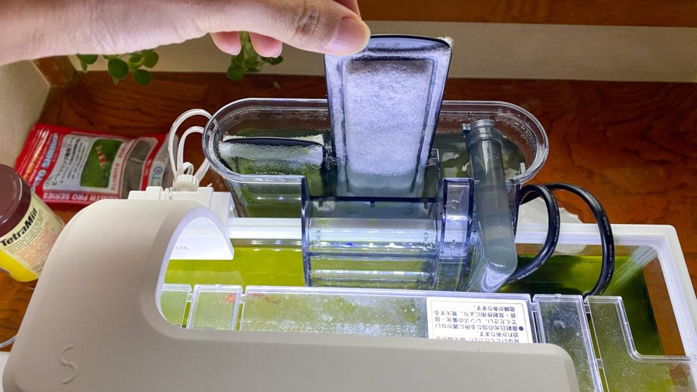 青水対策解消記の水槽の様子 (9)