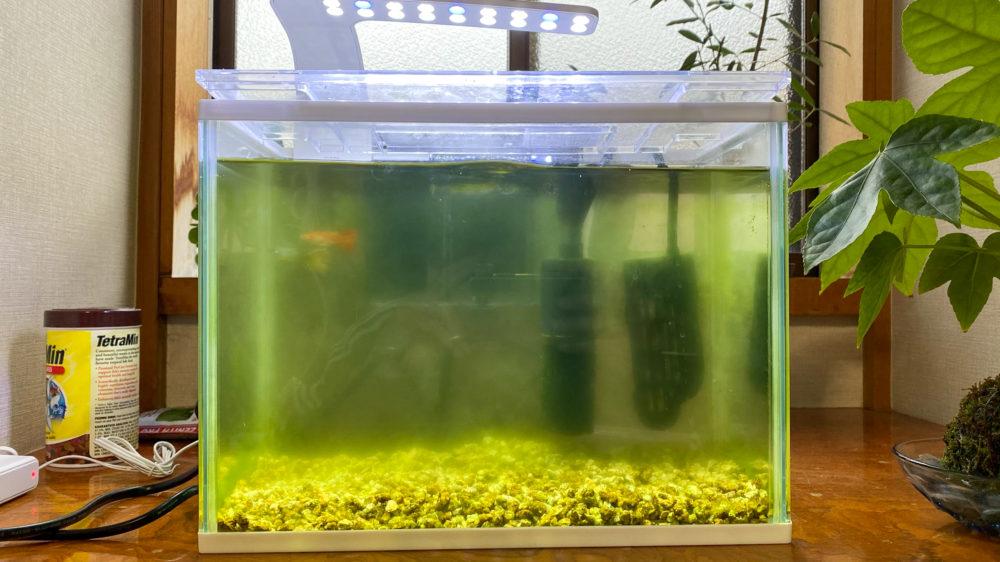 青水対策解消記の水槽の様子 (1)