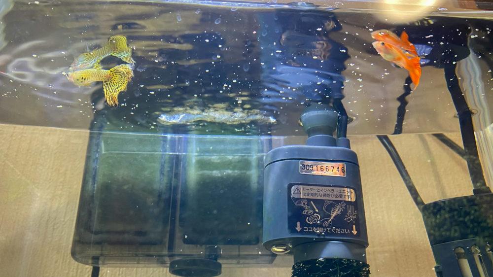 コメット 小型熱帯魚の主食 グッピー・テトラ (11)