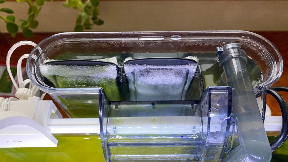 青水対策解消記の水槽の様子 (10)
