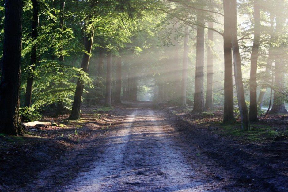 癒しの森の画像
