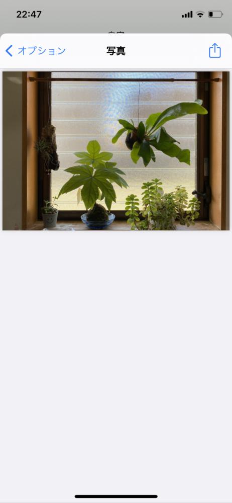 iPhoneの写真をPDFに変換する方法 (4)