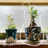 #21 窓際の観葉植物に書き込み イラスト