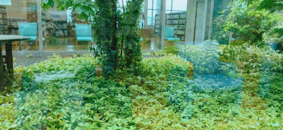 図書館の庭